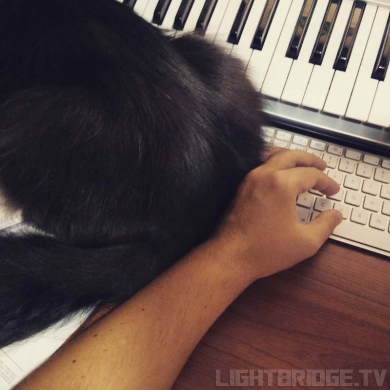 The best place to put my cat-butt is on your keyboard