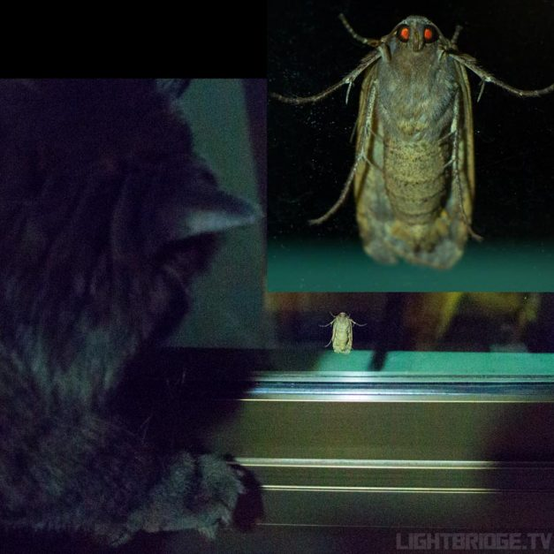 Alien Insect Meets Batman