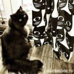 Batman installed new black cat curtains