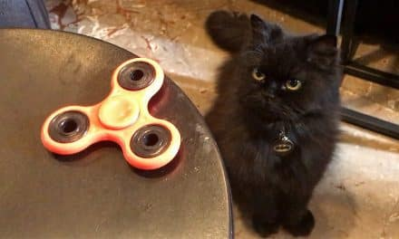 Batman meets fidget spinner